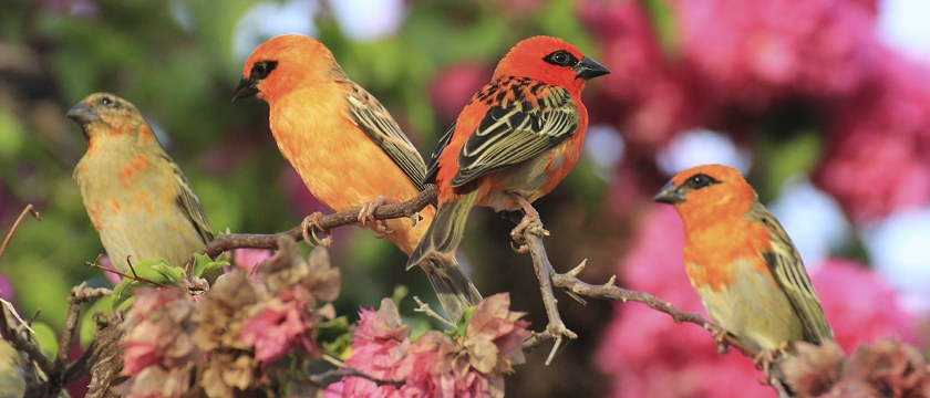 Редкие виды птиц на Сейшелах